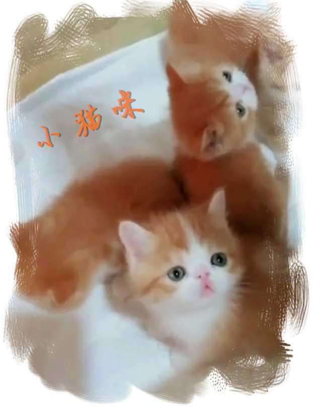 【视频】一窝小猫咪 截图