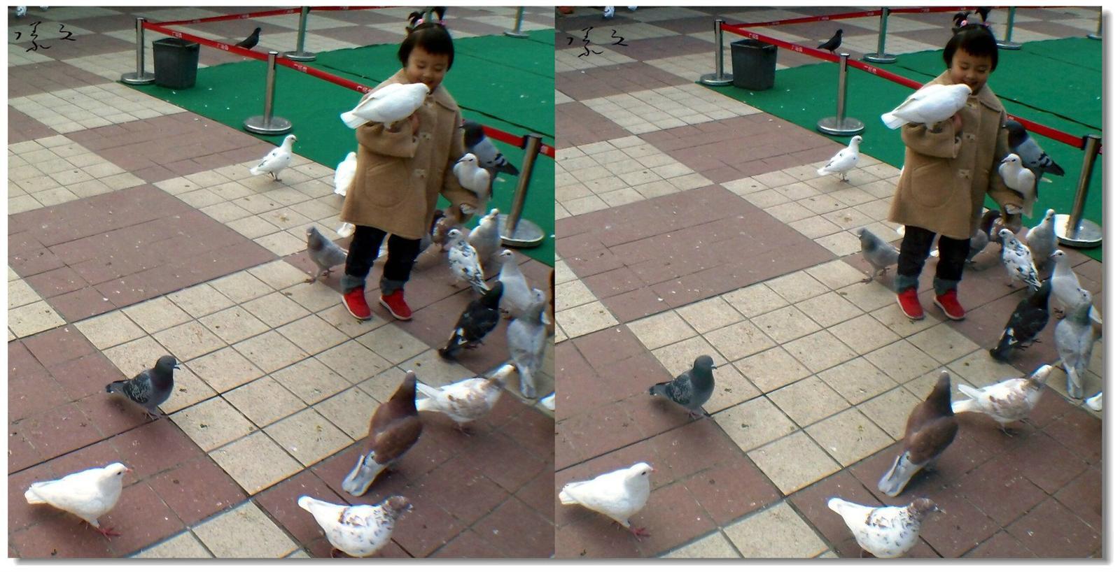 【原创】小孩与鸽子 -2