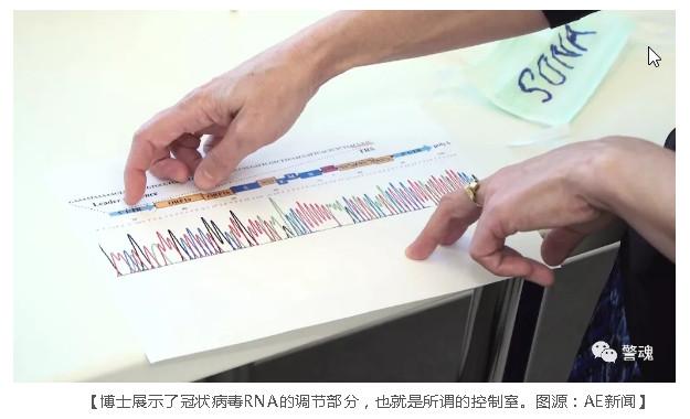 她展示了冠状病毒RNA的调节部分