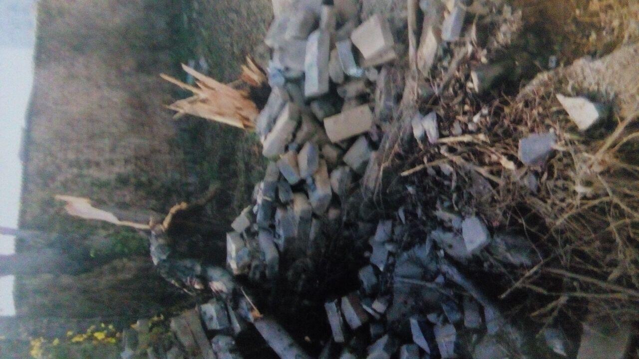 被锯坏的树木